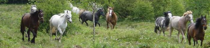 kudde Western Trail Ranch