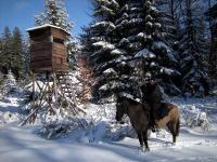winter paarden ardennen
